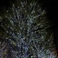クリスマスイルミネーション画像1