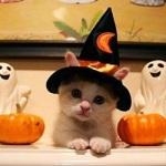 ハロウィンは猫メイクで可愛さをアピールしよう!