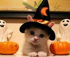ハロウィンは猫メイクで可愛さをアピールしよう! 画像2