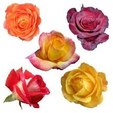父の日 花 種類 画像3