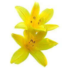 父の日 花 種類 画像4